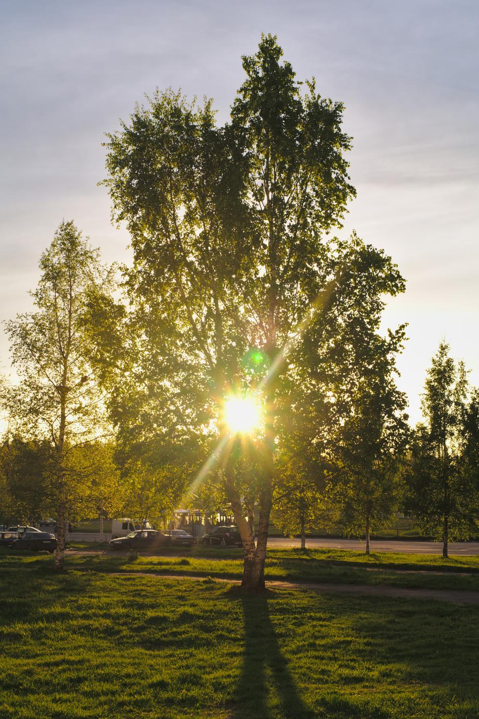 Download Free Stock Photo of Sun shining through a tree