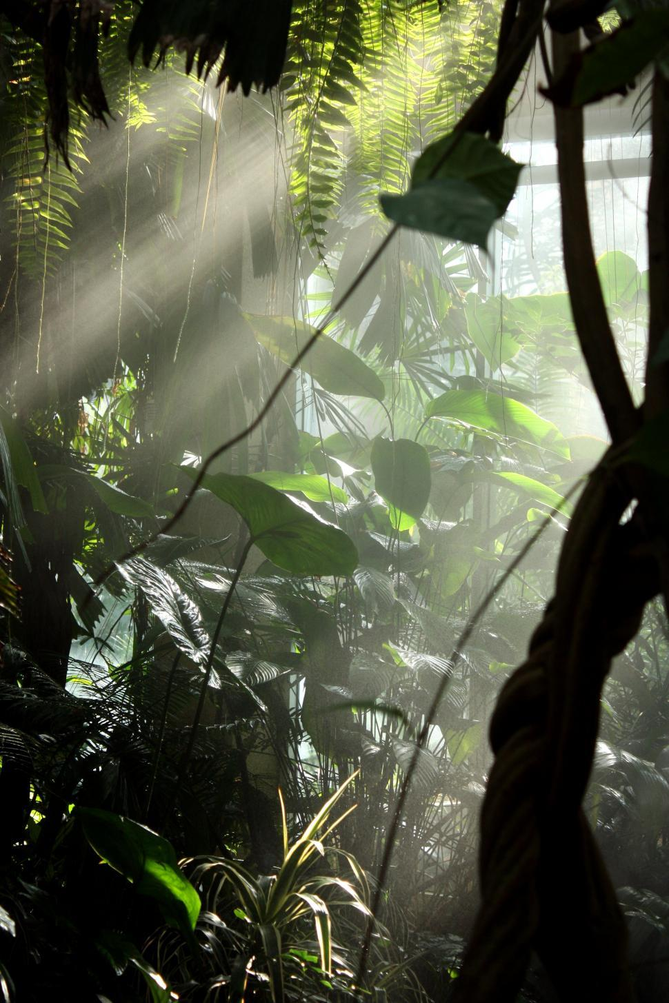Download Free Stock Photo of Sunlight shining through mist and tropical foliage
