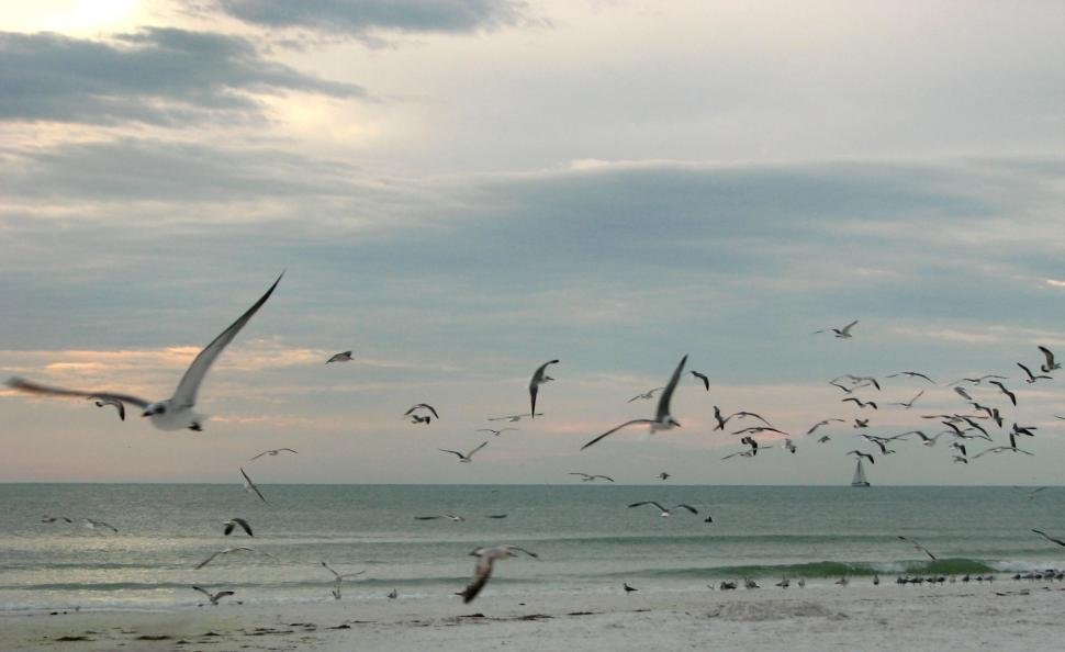 Download Free Stock HD Photo of Seagulls flying over the beach at sunset Online