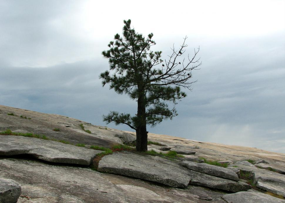 Download Free Stock Photo of A single tree growing on a rock face of a mountain