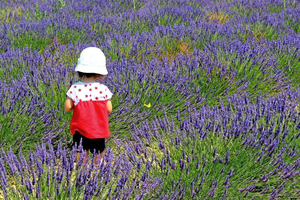 Download Free Stock Photo of Child chasing a yellow butterfly on a field of lavender in Prove
