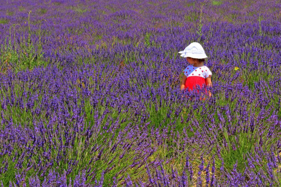 Download Free Stock HD Photo of Child wearing a hat on a lavender plantation in Provence, southe Online
