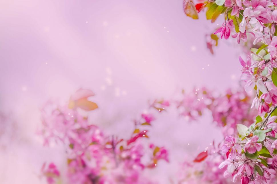 Download Free Stock Photo of Blossom