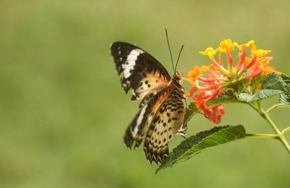Download Free Stock Photo of Butterfly on a Flower