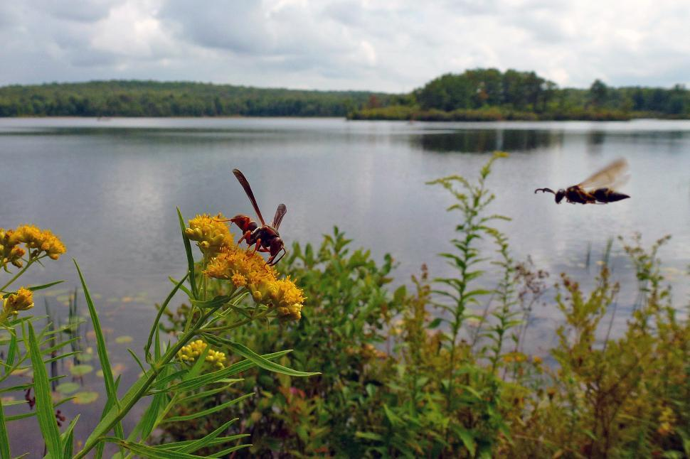 Download Free Stock HD Photo of Wasps By The Lake Online