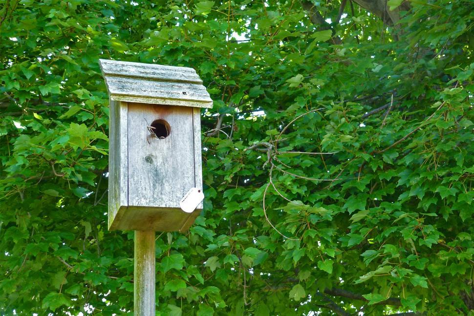 Download Free Stock HD Photo of Birdhouse Online