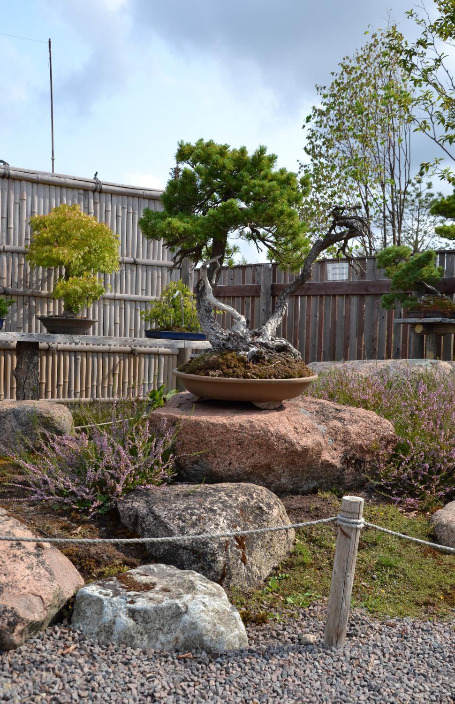 Download Free Stock HD Photo of Bonsai garden Online