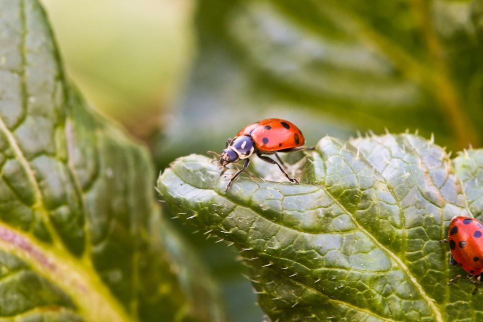 Download Free Stock Photo of Ladybug