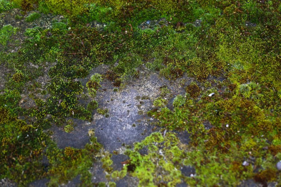 Download Free Stock HD Photo of mossy rocks Online