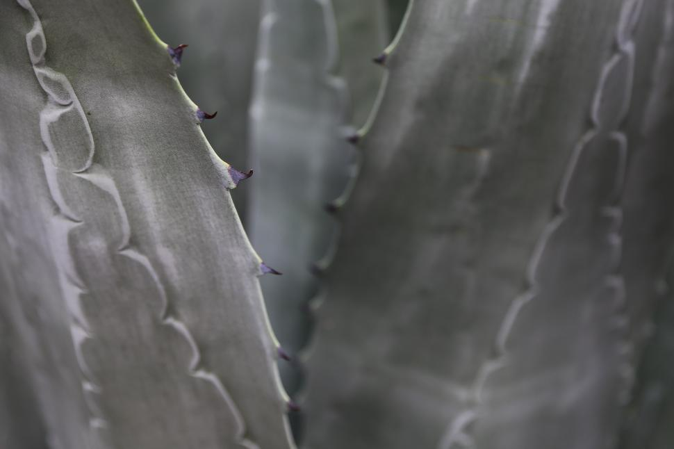 Download Free Stock HD Photo of Agave close-up Online