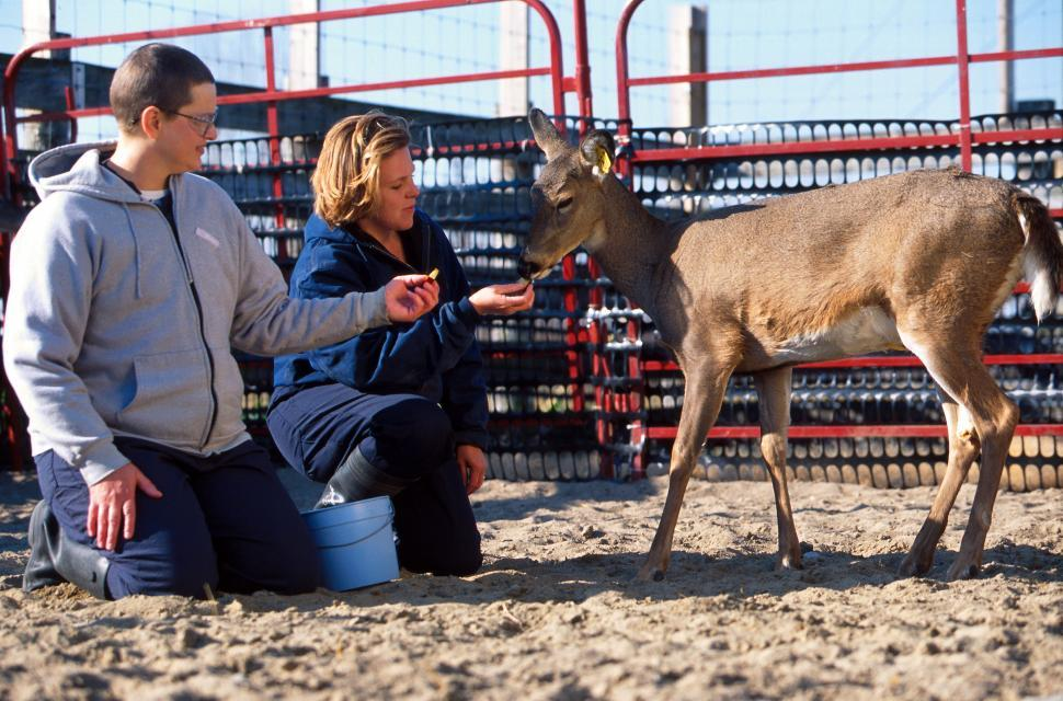 Download Free Stock HD Photo of Man and Woman give food to White-tailed deer Online