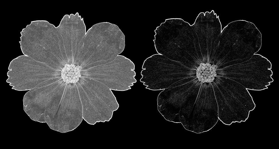 Download Free Stock Photo of Black and White Flower Set