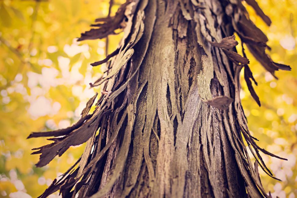 Download Free Stock Photo of Tree Bark