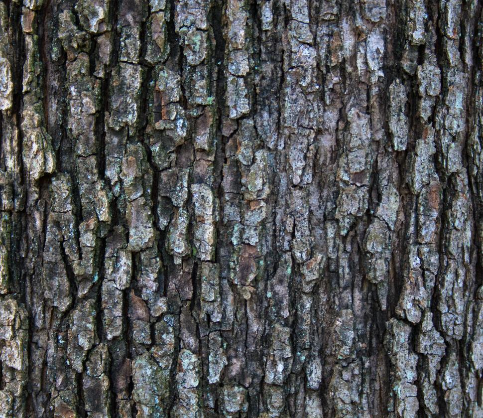 Download Free Stock HD Photo of Wood bark Online