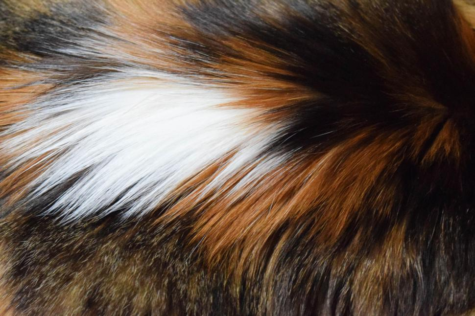 Download Free Stock HD Photo of Calico Fur Online