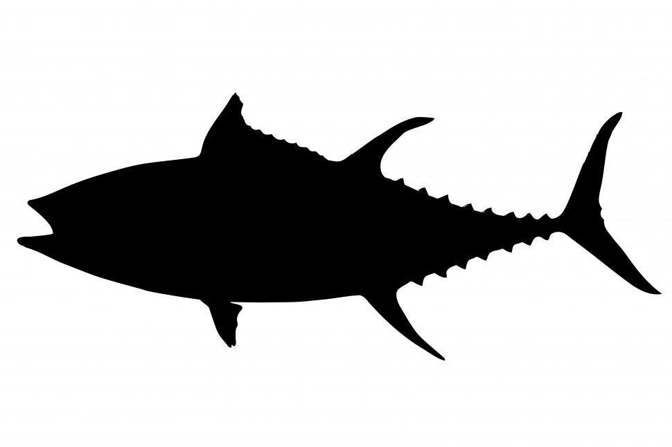 Download Free Stock Photo of Tuna fish