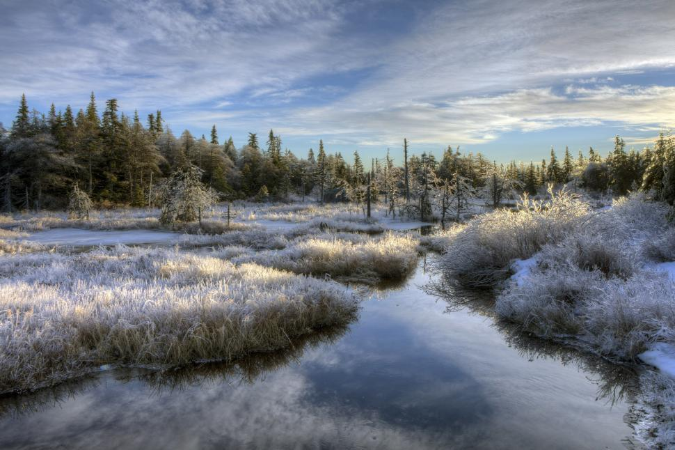 Download Free Stock Photo of Winter Landscape
