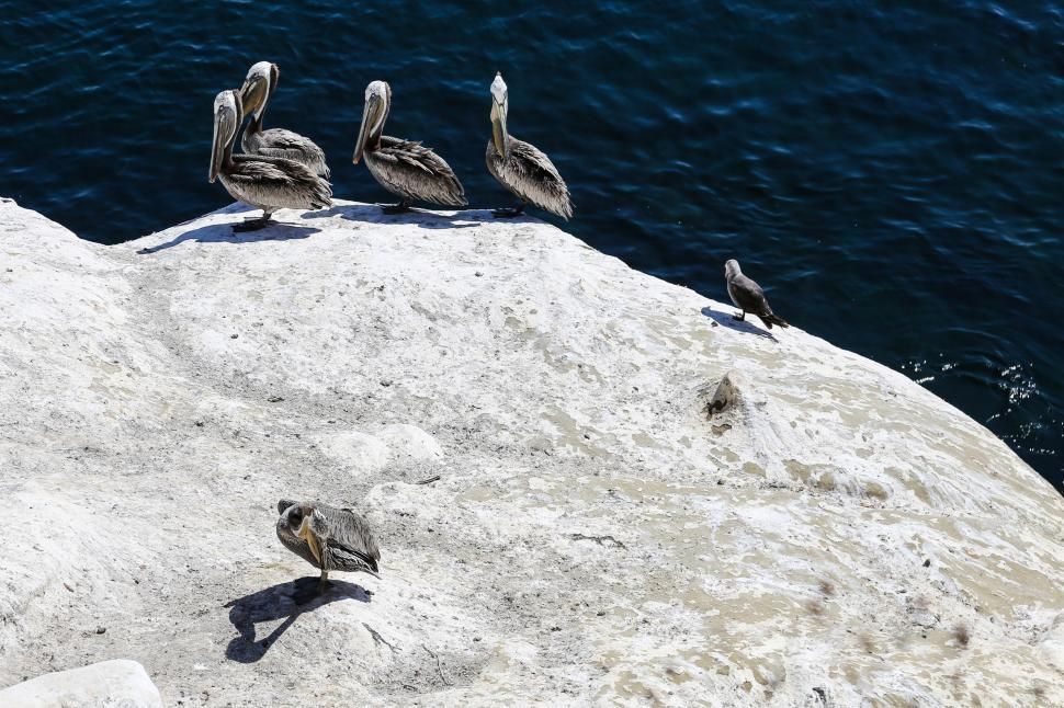 Download Free Stock HD Photo of Pelican Rock, La Jolla, San Diego Online