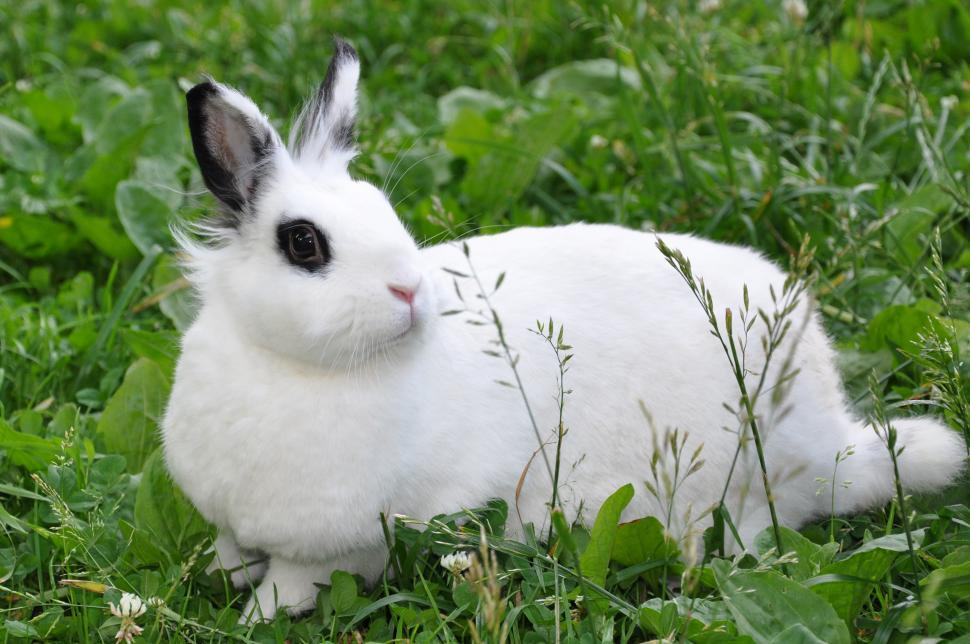 Download Free Stock Photo of Bunny
