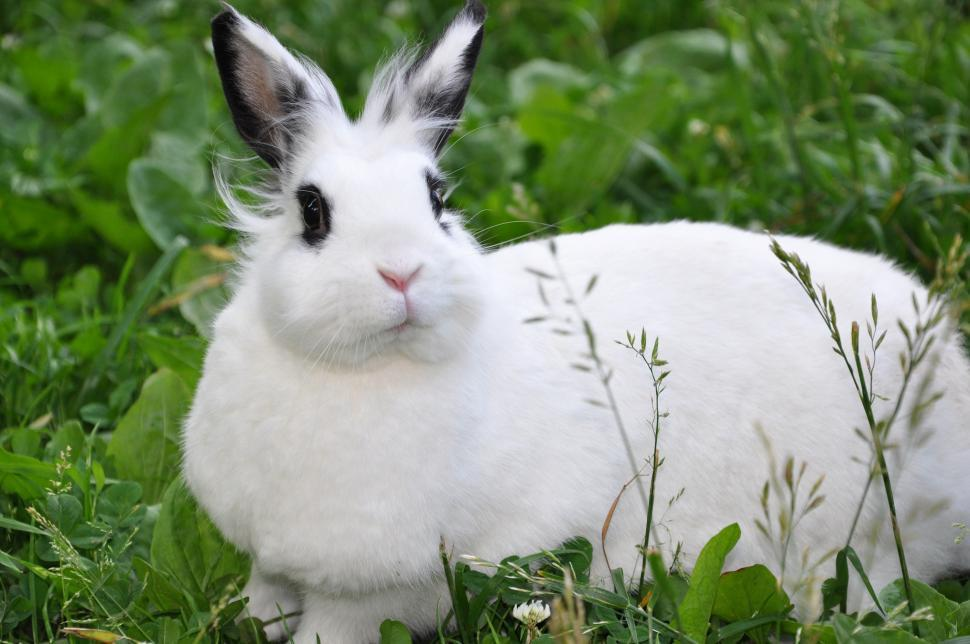 Download Free Stock Photo of Rabbit