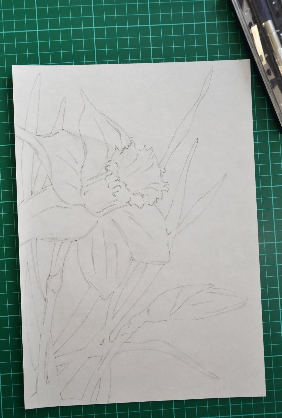 Download Free Stock HD Photo of Hand drawn daffodil Online