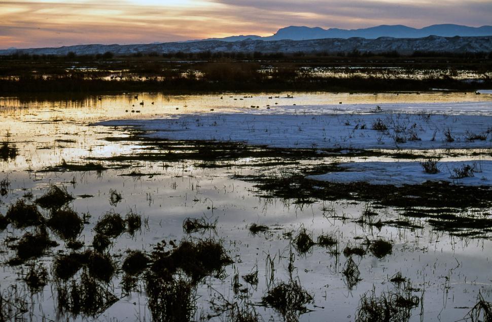 Download Free Stock HD Photo of Dark Marsh Online
