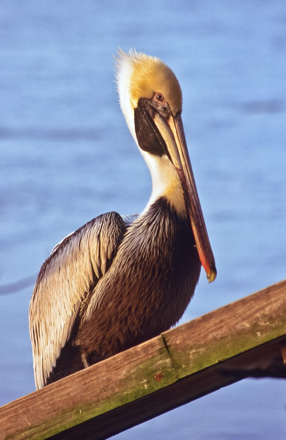 Download Free Stock HD Photo of Pelican Near Water Online