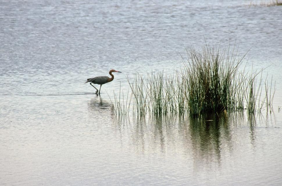 Download Free Stock HD Photo of Heron in the Water Online