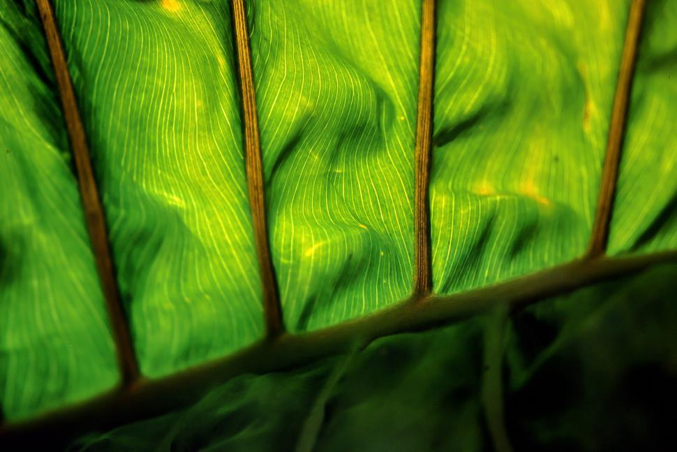 Download Free Stock HD Photo of Contrast Leaf Online