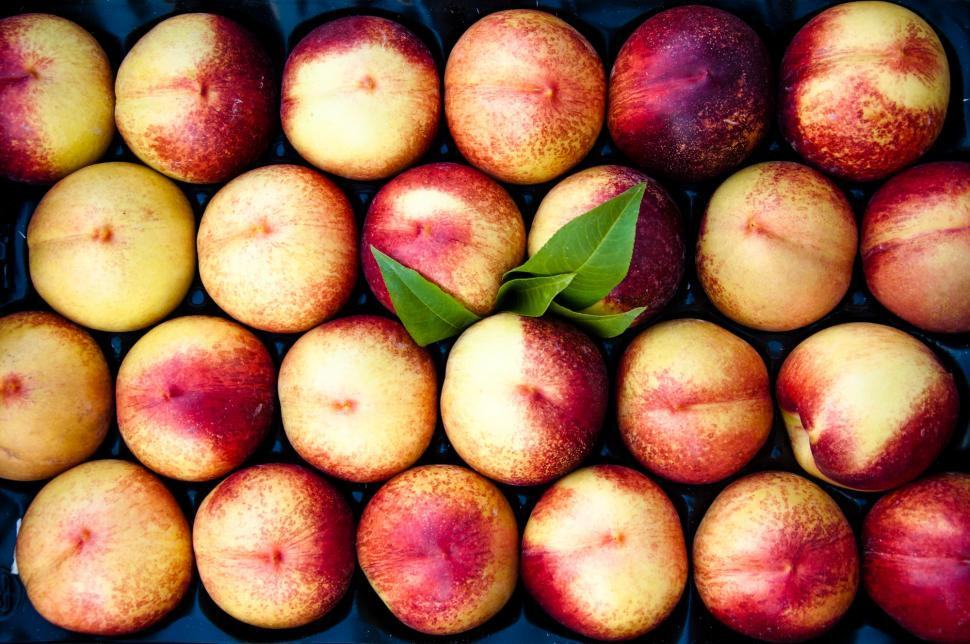 Download Free Stock Photo of Peaches