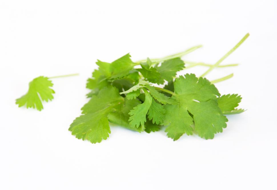 Download Free Stock HD Photo of Coriander fresh herbs Online