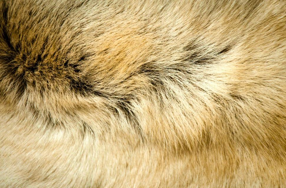 Download Free Stock HD Photo of Animal fur texture Online