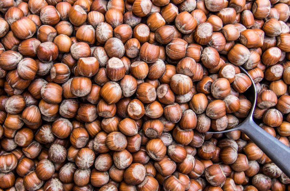 Download Free Stock HD Photo of Hazelnuts pattern background texture Online