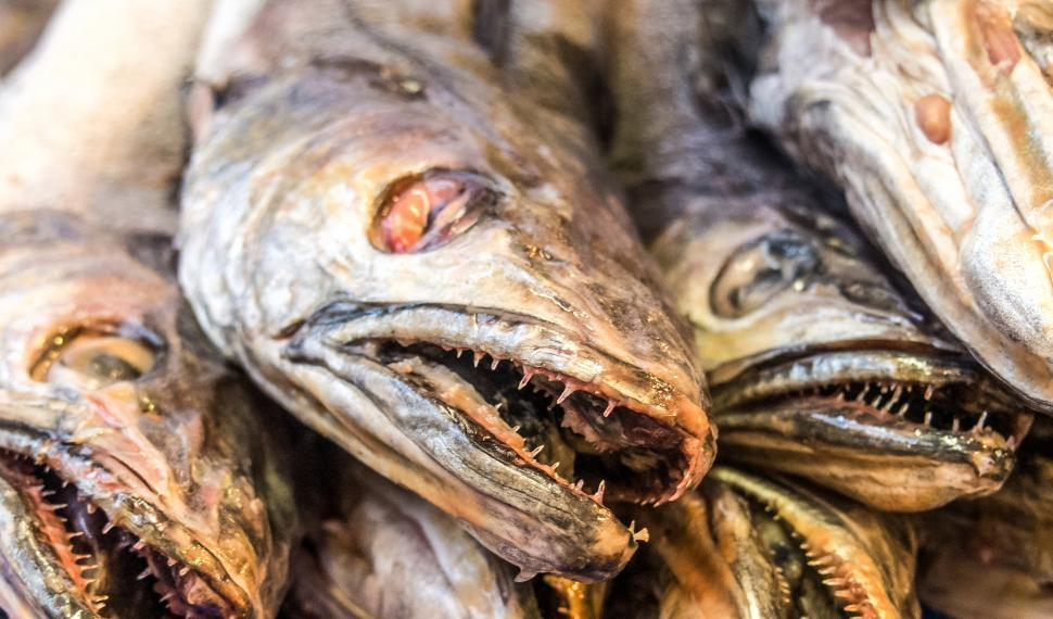 Download Free Stock HD Photo of Fresh fish in a market Online