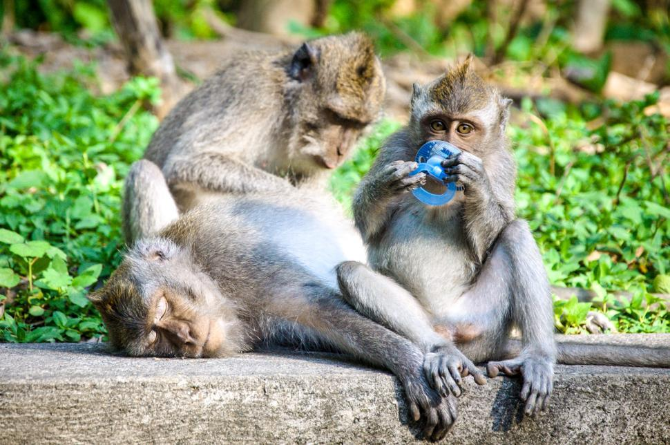 Download Free Stock HD Photo of Monkey mother and baby Online