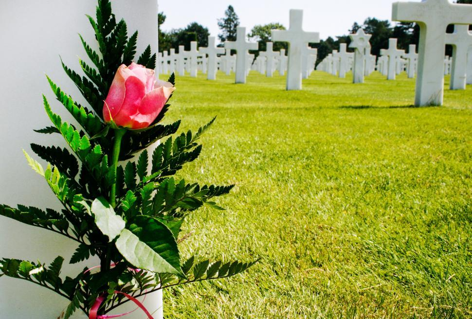 Download Free Stock HD Photo of Flower at military grave Online