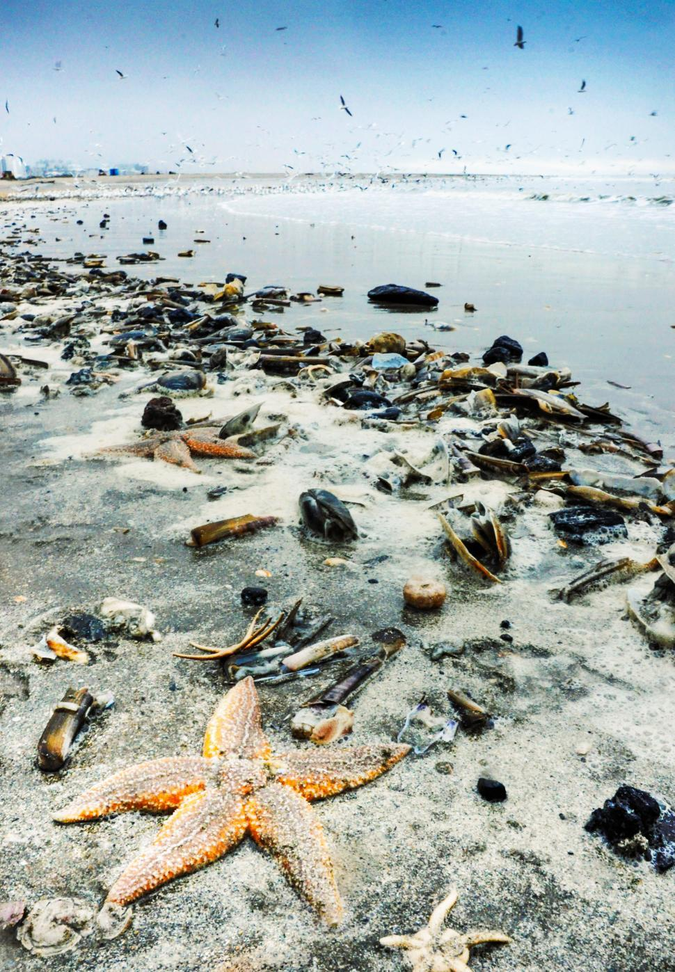 Download Free Stock Photo of Starfish and shells washed to shore