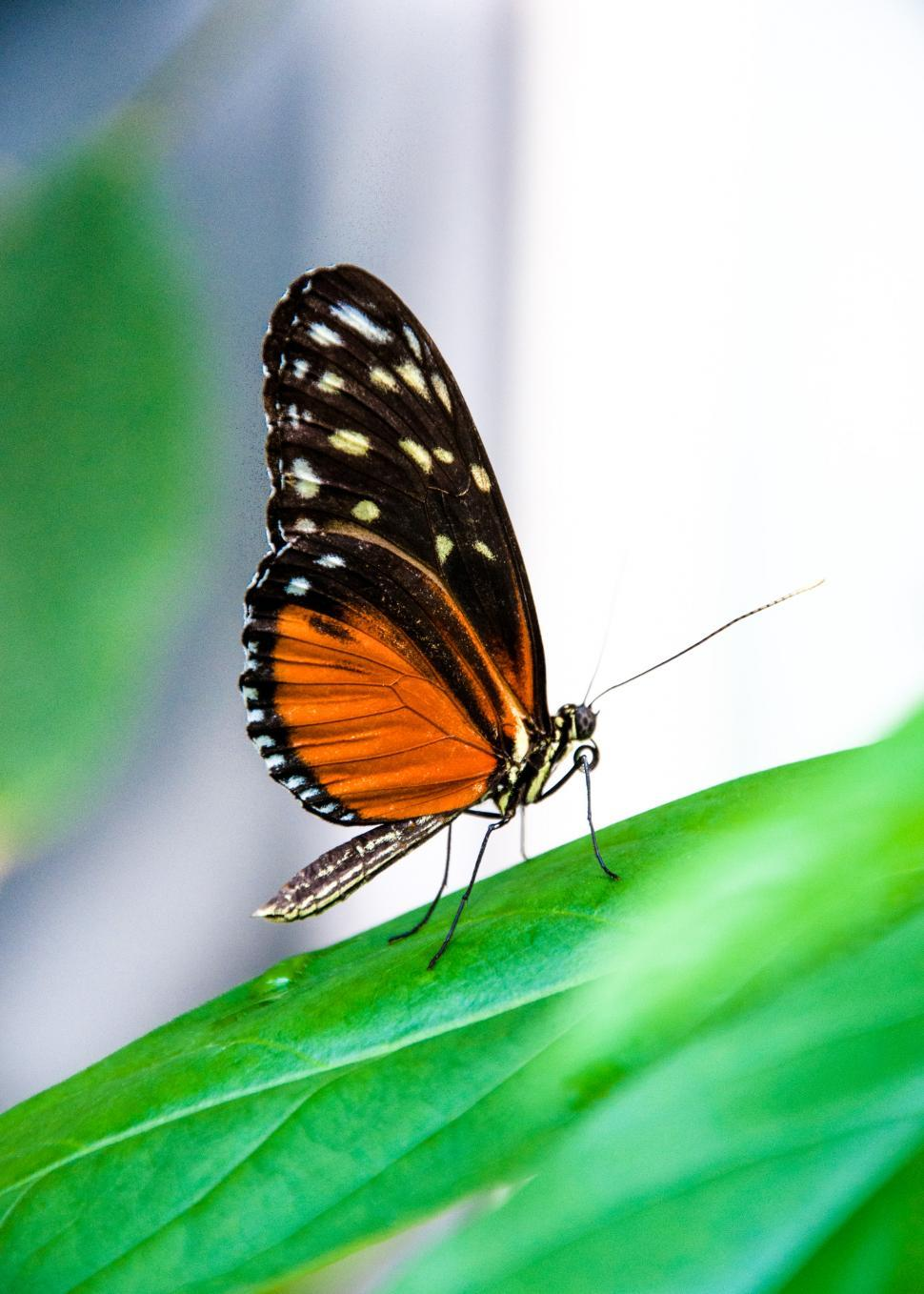 Download Free Stock Photo of Butterfly in nature