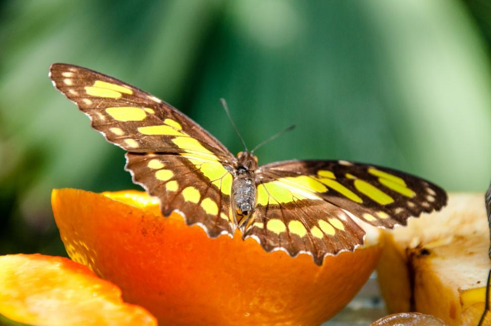 Download Free Stock HD Photo of Butterfly in nature Online