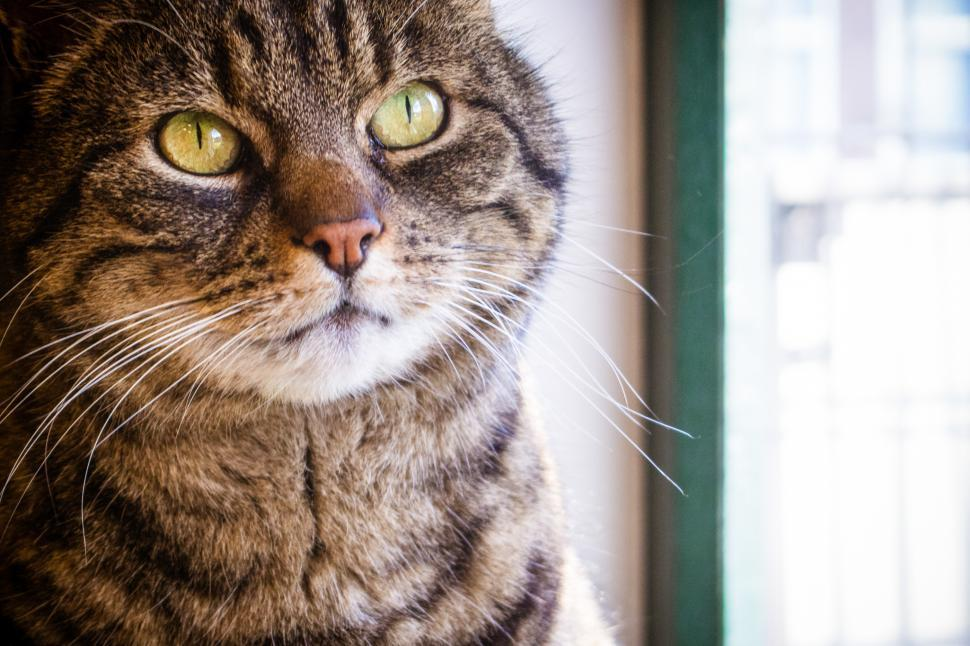 Download Free Stock Photo of head cat close up