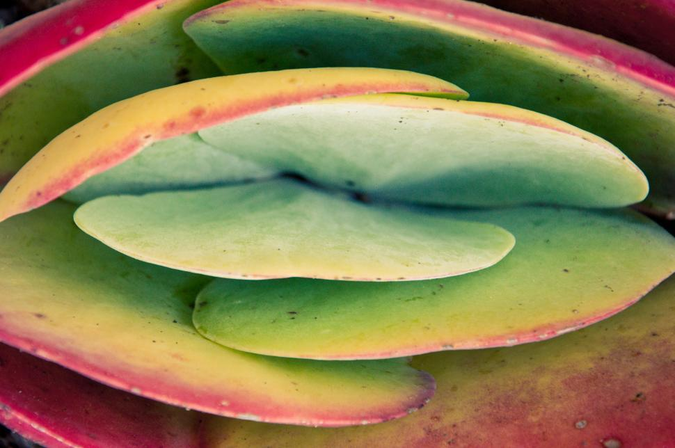 Download Free Stock Photo of CACTUS PLANT