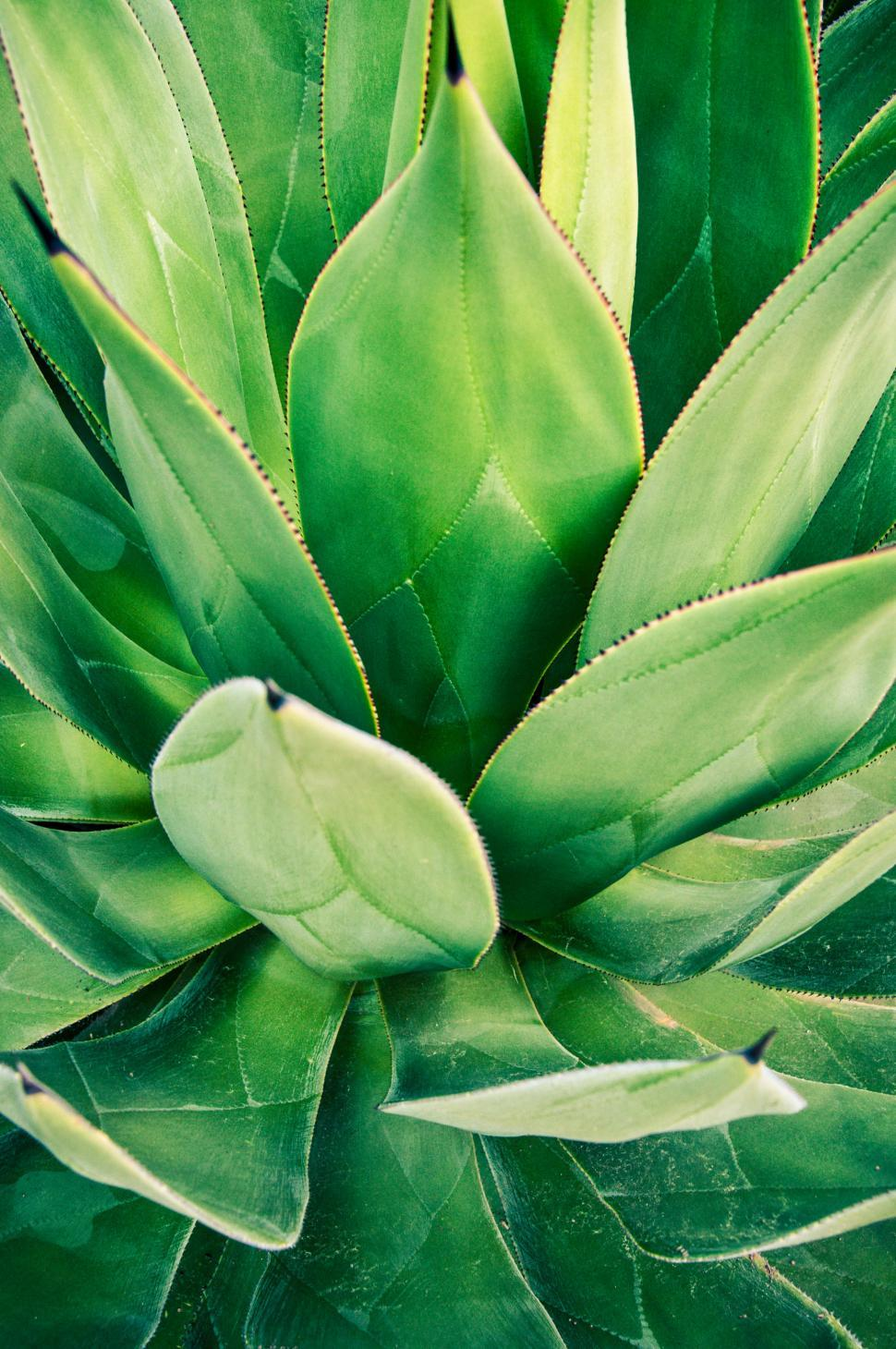 Download Free Stock HD Photo of Sharp pointed agave plant leaves Online