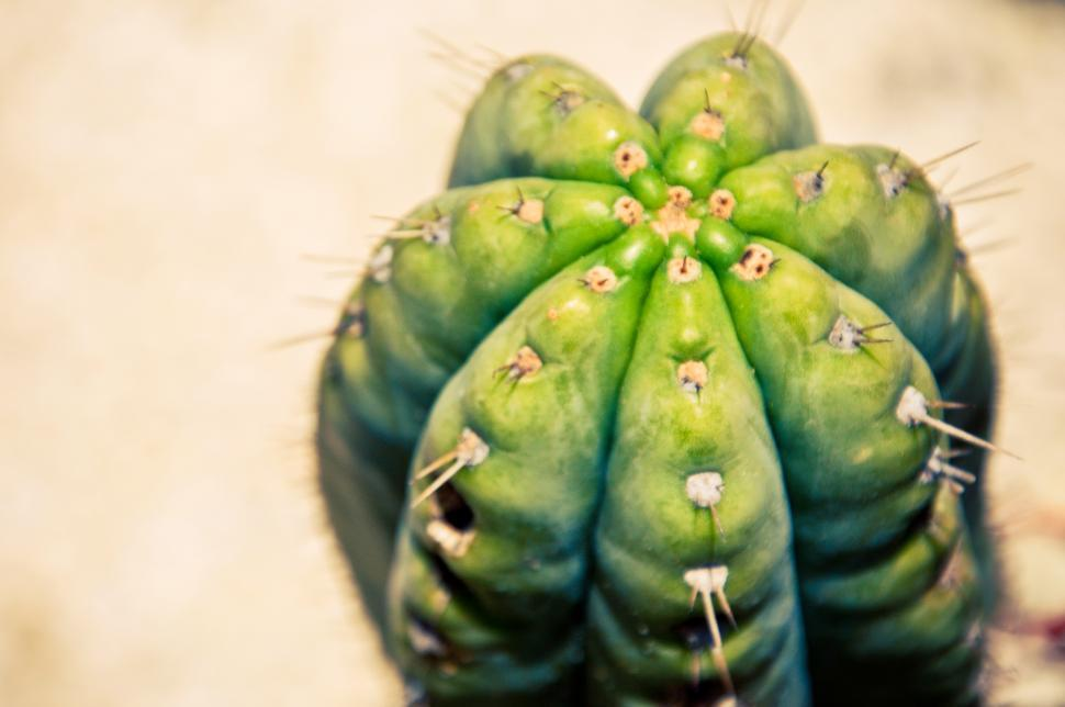 Download Free Stock HD Photo of Close up of cactus plant Online