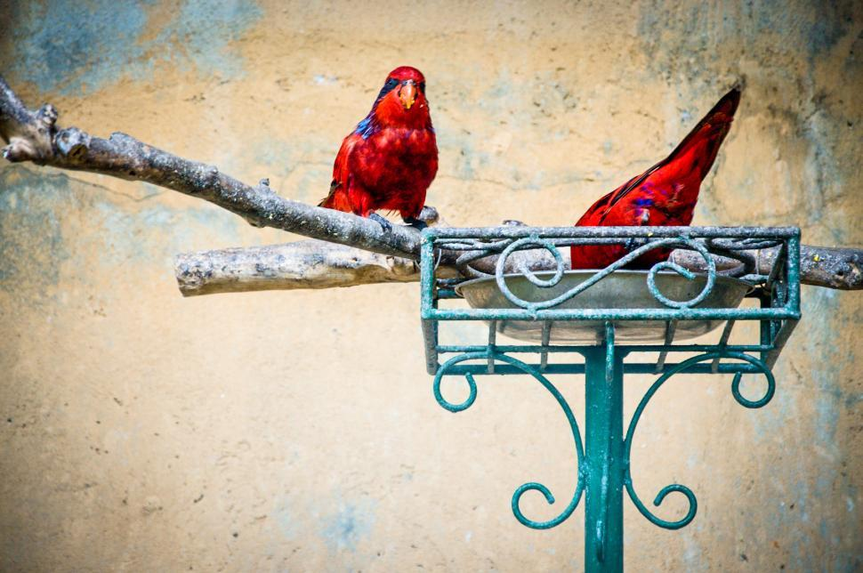 Download Free Stock Photo of Red parrot bird