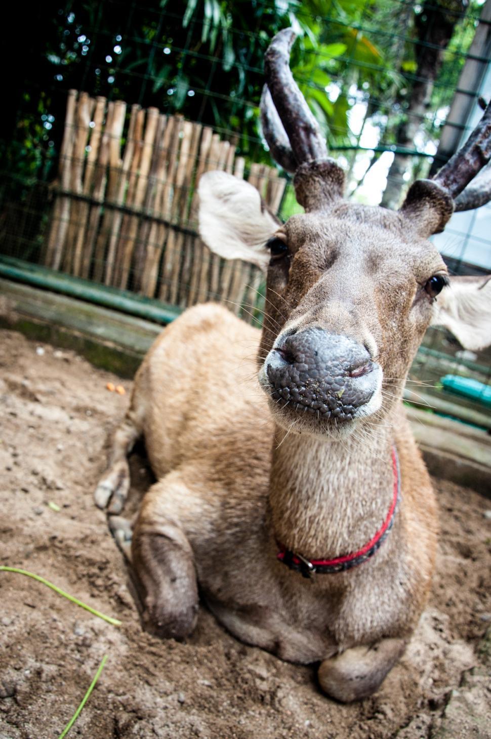 Download Free Stock HD Photo of Deer Online