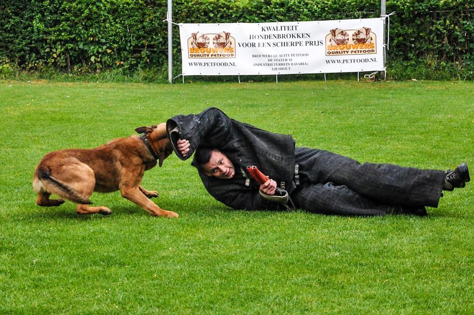 Download Free Stock HD Photo of dog training german shepherd Online