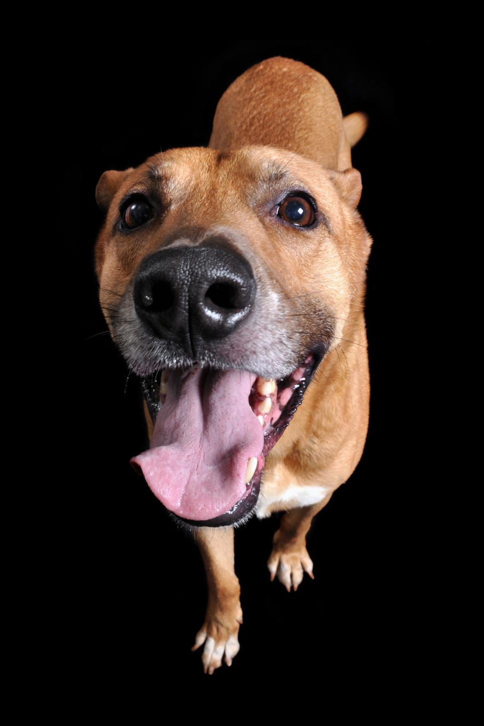 Download Free Stock Photo of Happy Dog