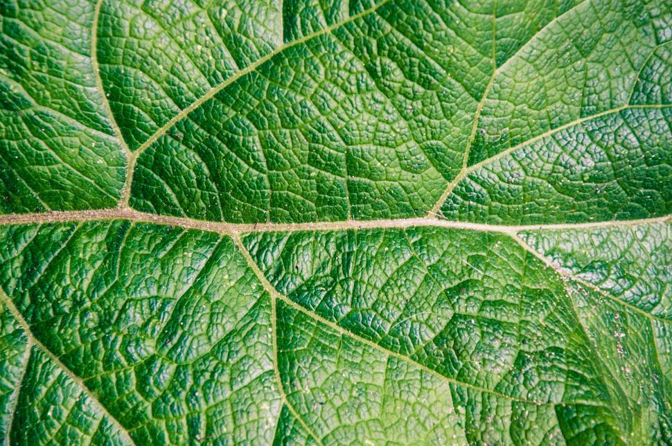 Download Free Stock Photo of Leaf texture close up