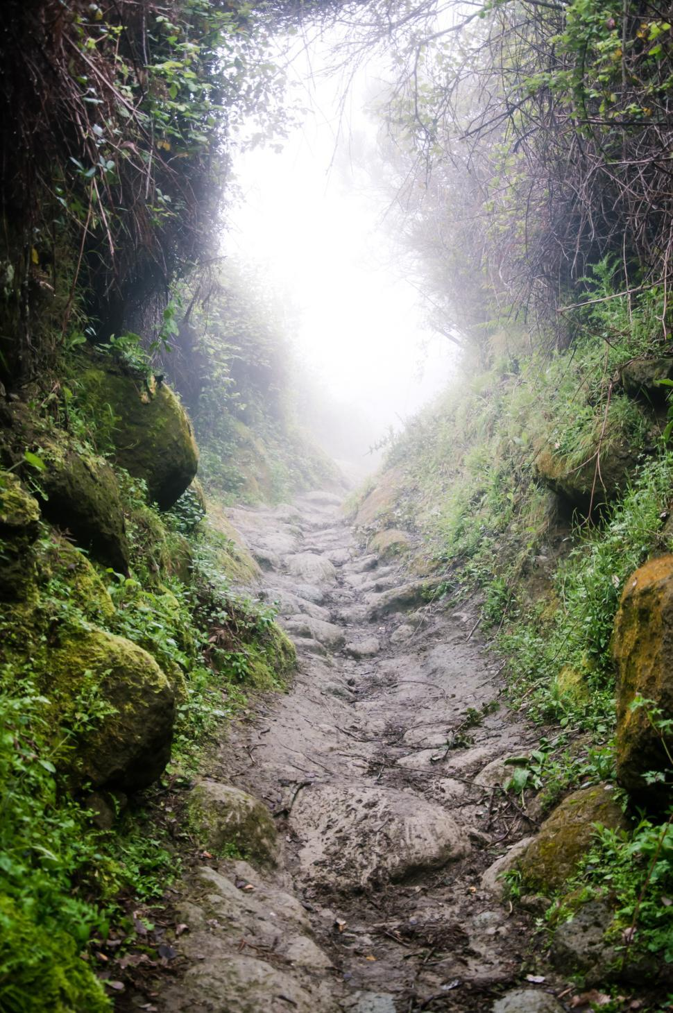 Download Free Stock HD Photo of misty path through mounting trail Online