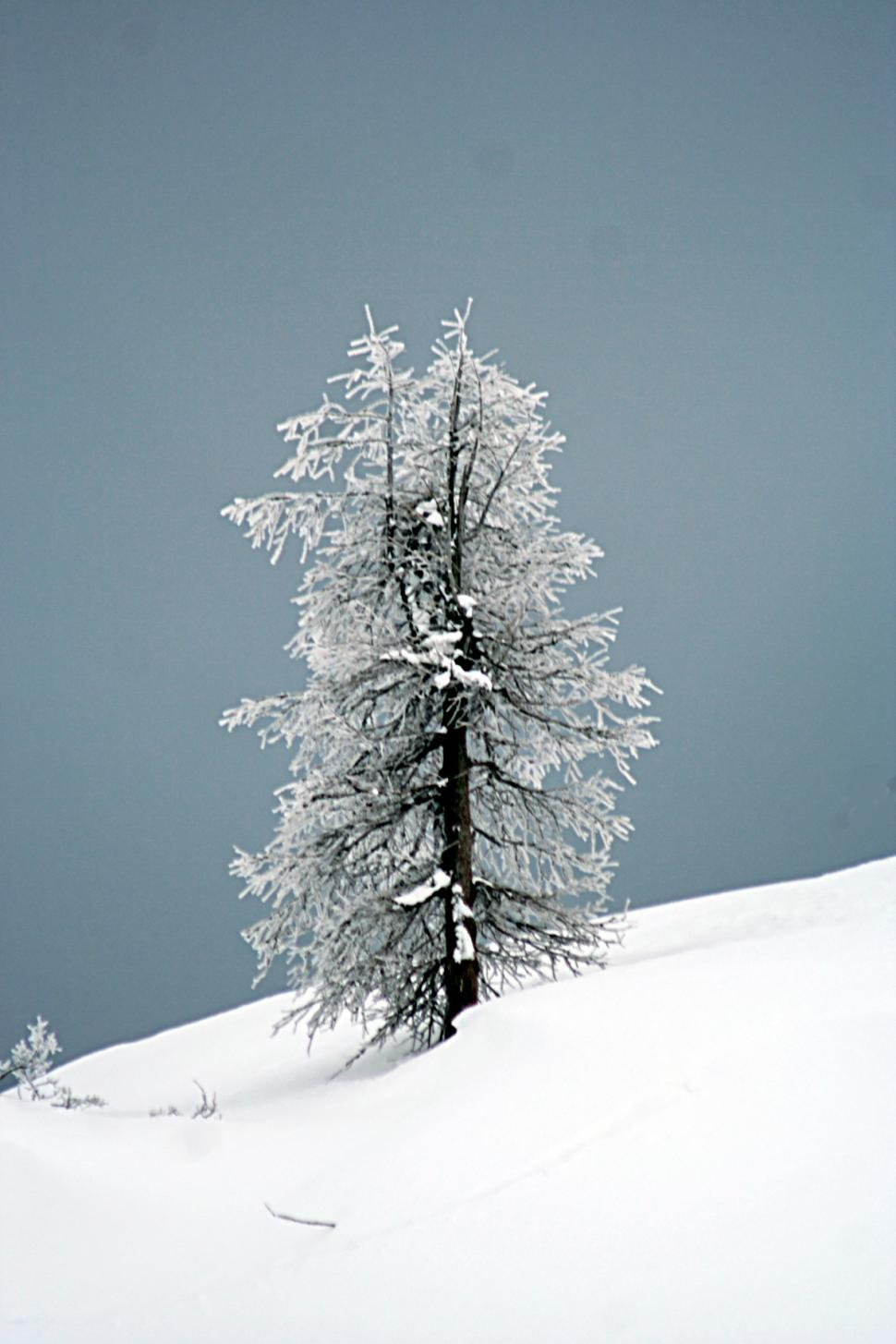 Download Free Stock Photo of The tree